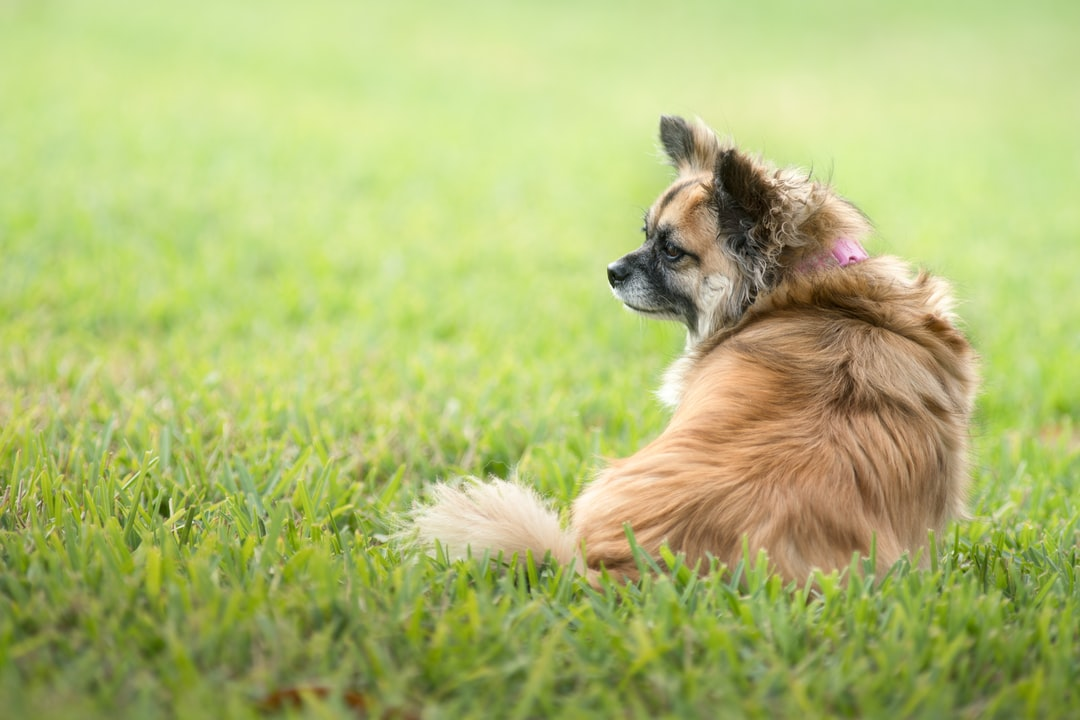 A dog sitting on top of a grass covered field